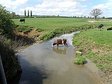 The Eye brook is a shallow stream here, some 4 metres wide. The picture shows it passing through pasture dotted with cows, one of which is standing in the water drinking.
