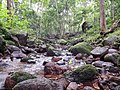 A little stream inside the forest (20185966170).jpg