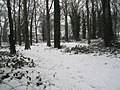 A snowy Battins Copse - geograph.org.uk - 1650152.jpg