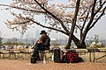 A street musician in Seoul under a blossom cherry tree, April, 2016.jpg