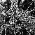 A tangled mess (42904180441).jpg