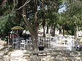 Abu Ghosh Festival May 2010 002.JPG