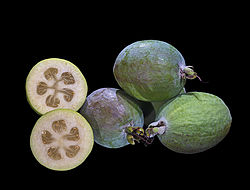Acca sellowiana (fruto).