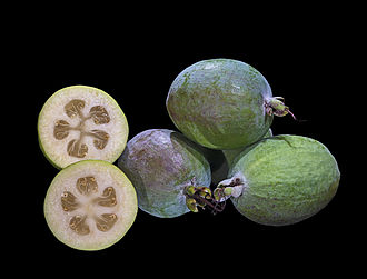 Acca sellowiana - Fruit