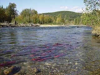 Adams River (British Columbia) river in Canada