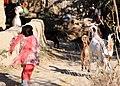 Afghan, coalition forces patrol local Afghan villages DVIDS482283.jpg