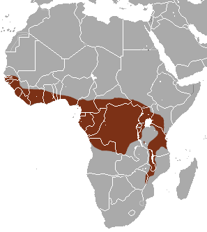 Map of Africa showing highlighted range covering southern West Africa and much of central Africa