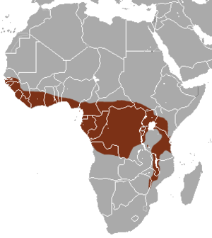 African palm civet - Image: African Palm Civet area