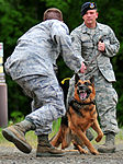 Airmen and military working dogs of 673d Security Forces Squadron train jointly with TSA officers and dogs DVIDS425338.jpg