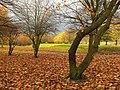 Alexandra Park in November - geograph.org.uk - 329885.jpg