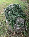 All Saints Church, Nazeing, Essex, England ~ churchyard stone with ivy.JPG