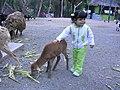 Amor entre especies.jpg