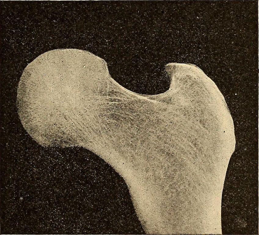 File:Anatomy, physiology and hygiene (1900) (14775861451