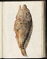 Animal drawings collected by Felix Platter, p1 - (115).jpg