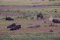 Animals at Pilanesberg National Park 5.jpg