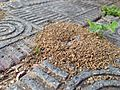 Anthill and brick sidewalk (28050227252).jpg