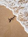 Apollo Bay (AU), Beach -- 2019 -- 170804.jpg