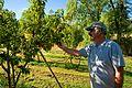 Applecart 89 - Flickr - USDAgov.jpg