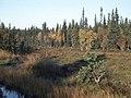 Aradalen Naturreservat2.jpg