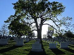 Arlington National Cemetery, Virginia (2013) - 02.JPG
