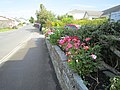 Around Tintagel, Cornwall (461182) (9455902495).jpg