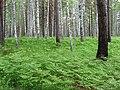 Asinovsky District, Tomsk Oblast, Russia - panoramio (176).jpg