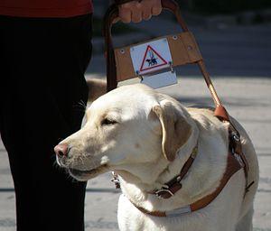 AO1 Foundation - Image: Assistance dog