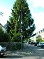 Augsburger Strasse Fichte.jpg