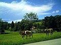August 2014 St. Peter Schwarzwald - panoramio (11).jpg