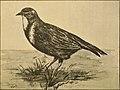 Aunt May's bird talks (1900) (14565690339).jpg
