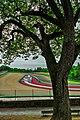 Autodromo Dino e Enzo Ferrari.jpg