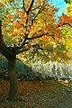 Autumn Colors, Gojal Valley.jpg