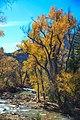 Autumn colours in SW Utah - spectacular colours along Huntington Creek on Hwy 31, Utah (15654782922).jpg