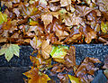 Autumn leaves 02.jpg