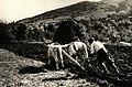 BASA-2072K-1-316-70-Plowing with cattle in Bulgaria.jpg