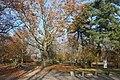 Bad Dürrenberg, spa park in the autumn.JPG