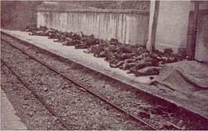 Some of the corpses gathered in the Balvano railway station