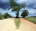 Barauna historica.jpg