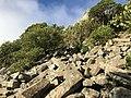 Basalt organ pipes on Mt Cargill, Dunedin, New Zealand (landscape).jpg