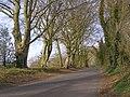 Beaconhill Beeches, Beacon Hill Lane - geograph.org.uk - 391539.jpg