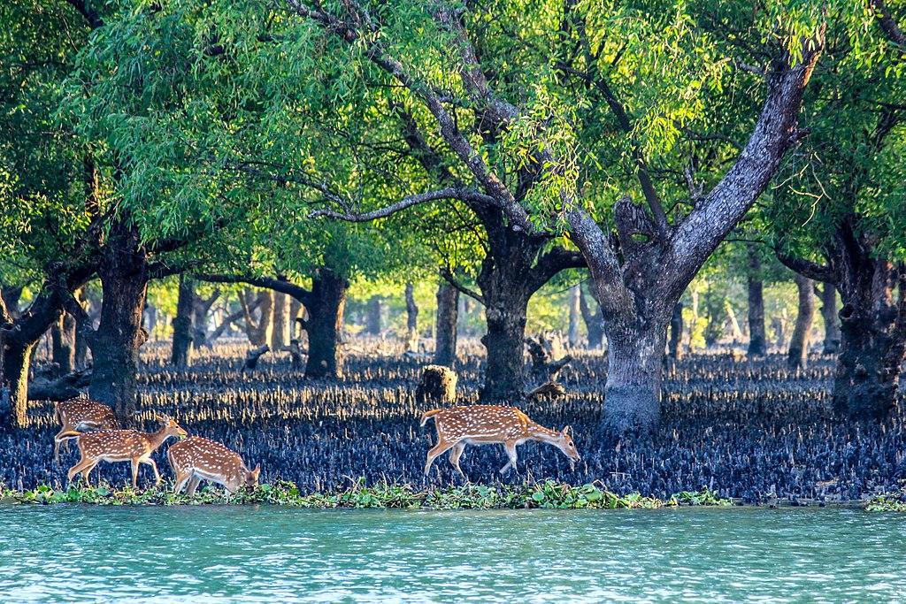 Beauty of Sundarban river02