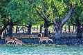 Beauty of Sundarban river02.jpg