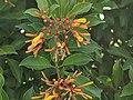 Bee and orange flower 7.jpg