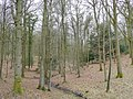 Beech and oak forest - geograph.org.uk - 1746502.jpg