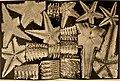 Beiträge zur Kenntnis der Meeresfauna Westafrikas (1914-15) (19742441013).jpg