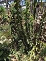 Belle Isle - Cactus.jpg