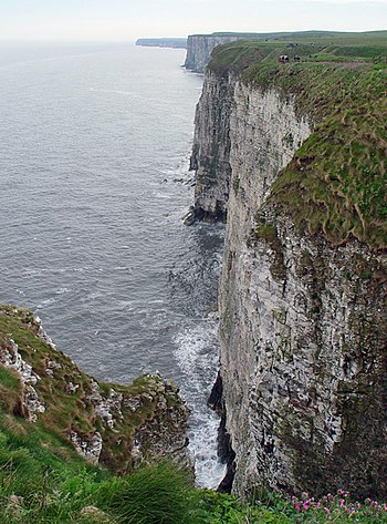 English: Bempton Cliffs Bring binoculars, this...