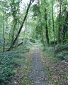 Berkeley Heights NJ path through woody area.JPG