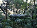 Berowra Walking Trail (11).jpg
