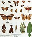 Betrachtungen uber die Farbenpracht der Insekten (1897) (20185765343).jpg